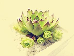 什么植物最旺你的生肖属相?